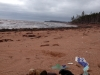 Great Beach - Searching for sea glass